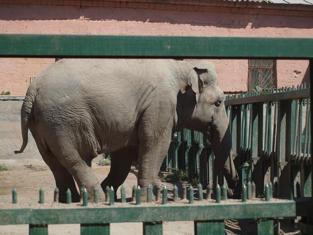 В одесском зоопарке хотят создать новые условия для слонов и завести жирафов