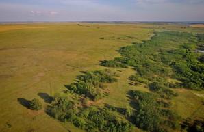 На юге Одесской области может появиться новый степной заповедник