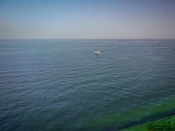 """""""Зеленое"""" Черное море в Одессе: цветут цианобактерии (ФОТО, ВИДЕО)"""