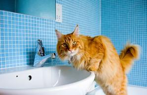 В пригородах Одессы завтра отключат воду