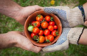 Есть ли будущее сельского хозяйства Украины и стоит ли в него инвестировать в 2021 году?