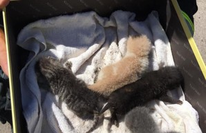 В Одессе пожарные спасали маленьких котят (ФОТО)
