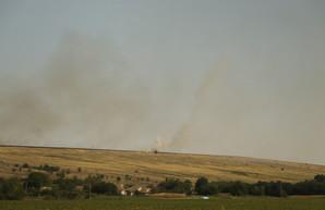 Урожай зерновых в Одесской области оказался рекордным