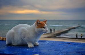 В Одессе показали осеннее море (ФОТО)